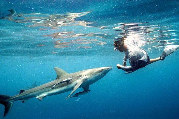 shark tank stream deutsch
