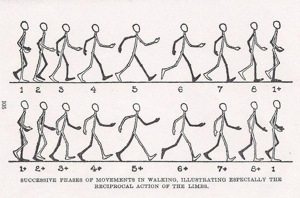 Basic Animation Workshop: A Human Figure Walking - Tel Aviv Makers ...