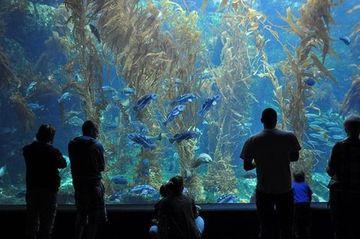 Scripps Birch Aquarium The San Diego Urban Exploration