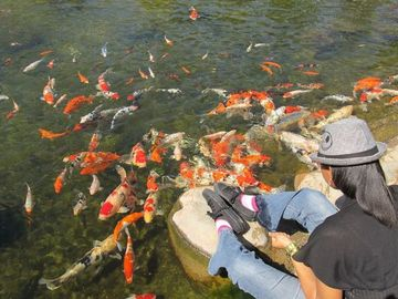 Visit to long beach 39 s acclaimed earl burns miller japanese for Koi fish pond csulb