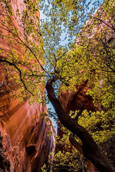 Slot canyon valley of fire