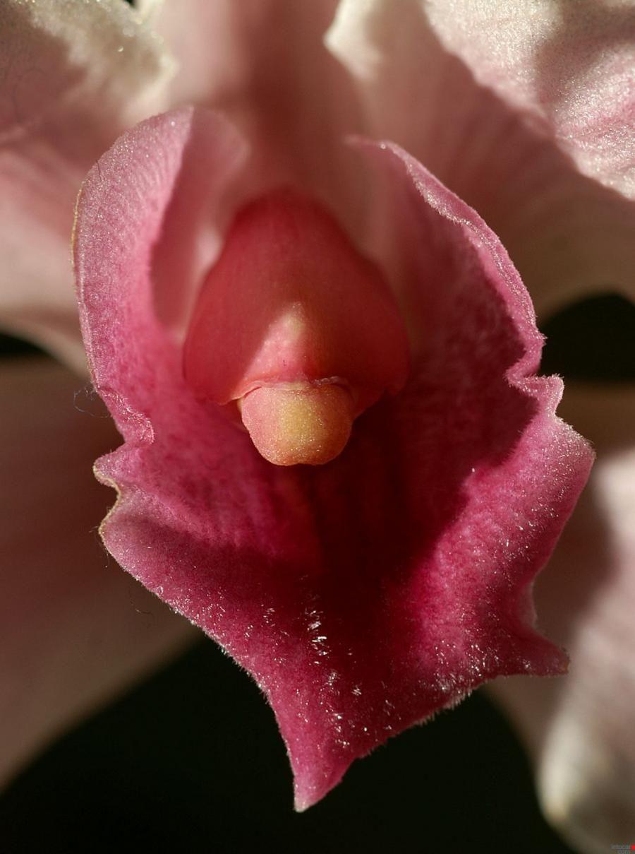 Цветы как вагина 2 фотография