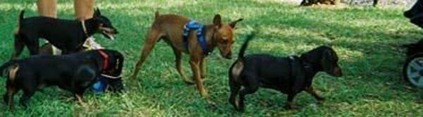 Dog Adoption Events Lake Fl
