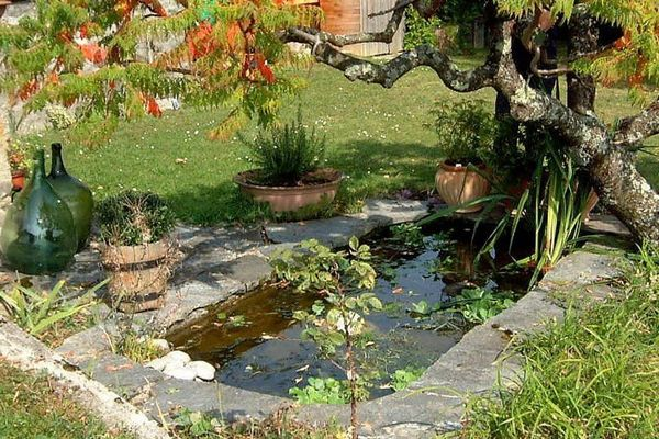 Geneva area pond club 39 s free meeting on october 25 for Garden pool meetup