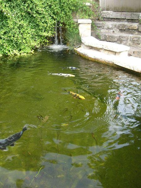 Geneva area pond club 39 s free meeting on september 5 for Koi pond bog filter