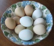 colorful eggs from pastured chickens