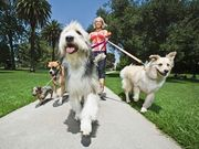 All About Dogs Walking And Pet Care Littleton Co